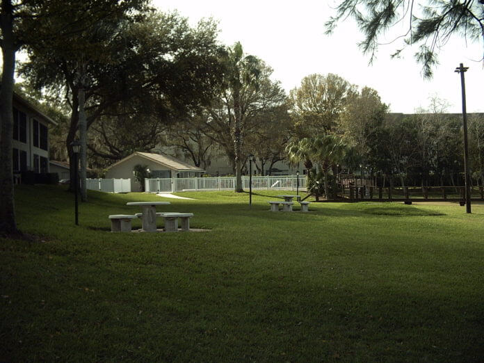 Types Of Florida Landscape Gr And Lawns