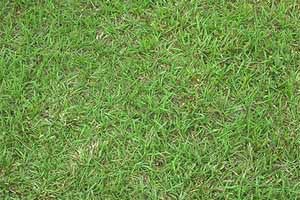 Types Of Gainesville Lawn Grasses To Choose From The