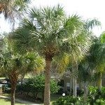 florida-palm-tree-care